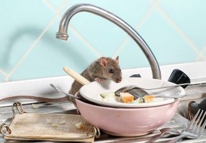 Pest problems more common in rented accommodation