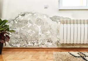 Tenants will be able to sue landlords if homes are cold or mouldy under new law